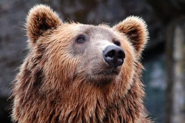 В Японии медведь проник на военную авиабазу