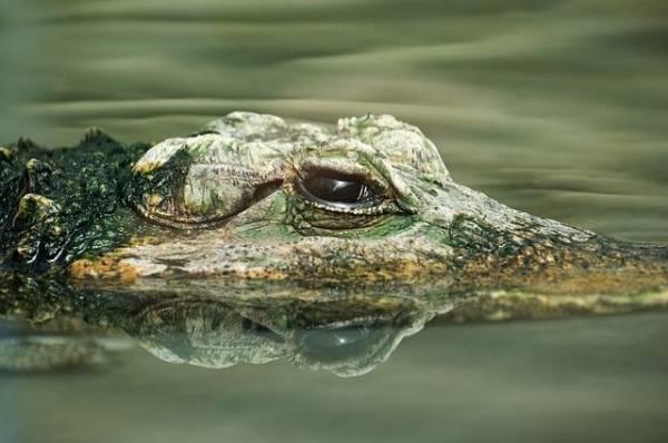 Ялтинский крокодиляриум полностью затопило в результате наводнения