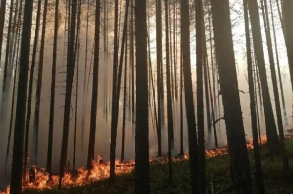 В Сербии загорелся лес около оружейной фабрики