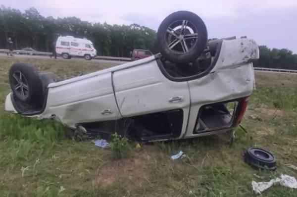 В Приморском крае клещ спровоцировал ДТП с тремя пострадавшими