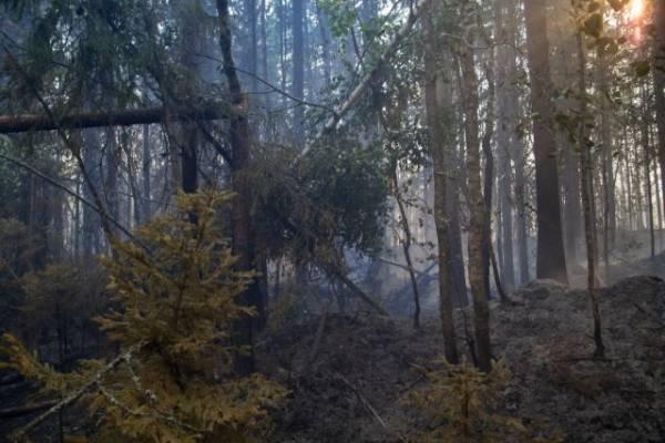 Дожди помогли потушить почти половину пожаров в Магаданской области