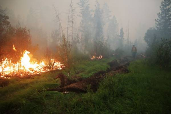 В России за сутки потушили 92 природных пожара