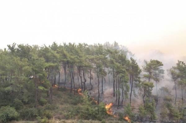 Турецкие власти назвали лесные пожары национальным бедствием