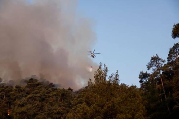 Террористы взяли на себя ответственность за поджоги лесов в Турции - СМИ