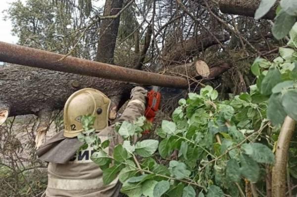 В Брянской области из-за урагана без света остался 21 населённый пункт