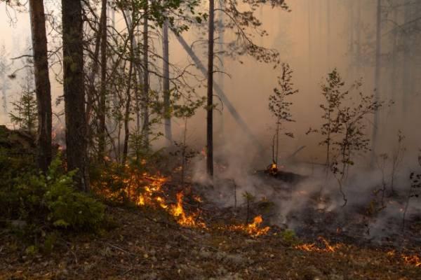 Пожару около СНТ под Оренбургом присвоен третий ранг