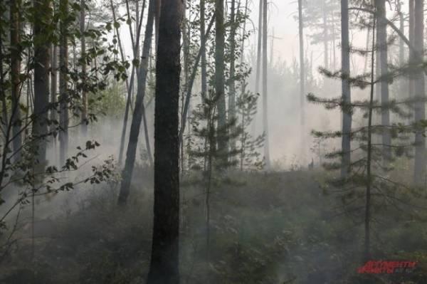 В Башкирии ликвидировали все лесные пожары