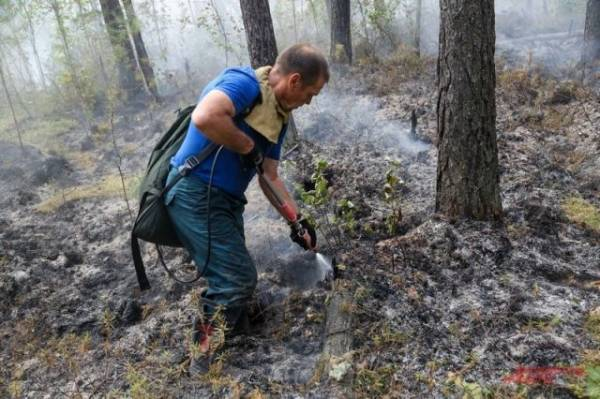 В России за сутки потушили 20 лесных пожаров