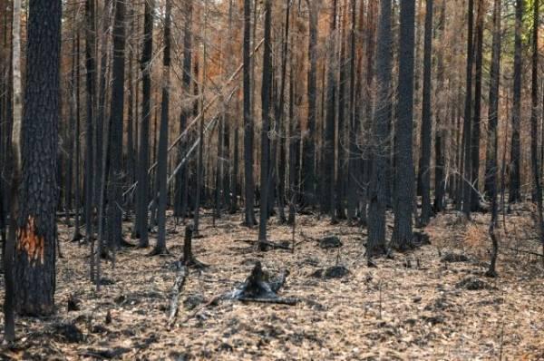 Greenpeace считает 2021 год рекордным по площади лесных пожаров в России