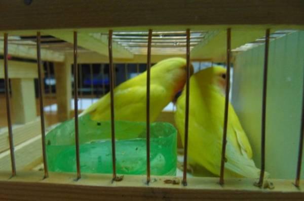 В Ленобласти мужчина сжег двух попугаев во время семейной ссоры