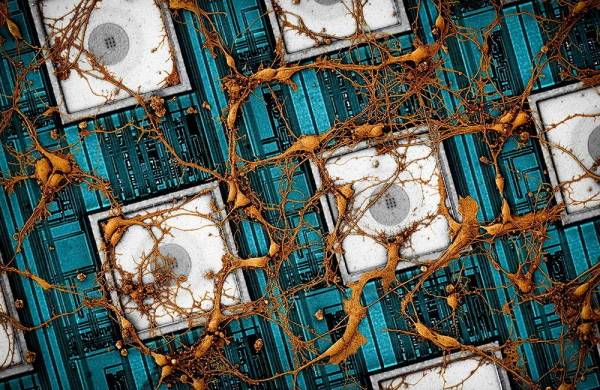 Samsung надеется скопировать нейронную сеть мозга для производства 3D-чипов